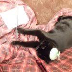 スランプ猫